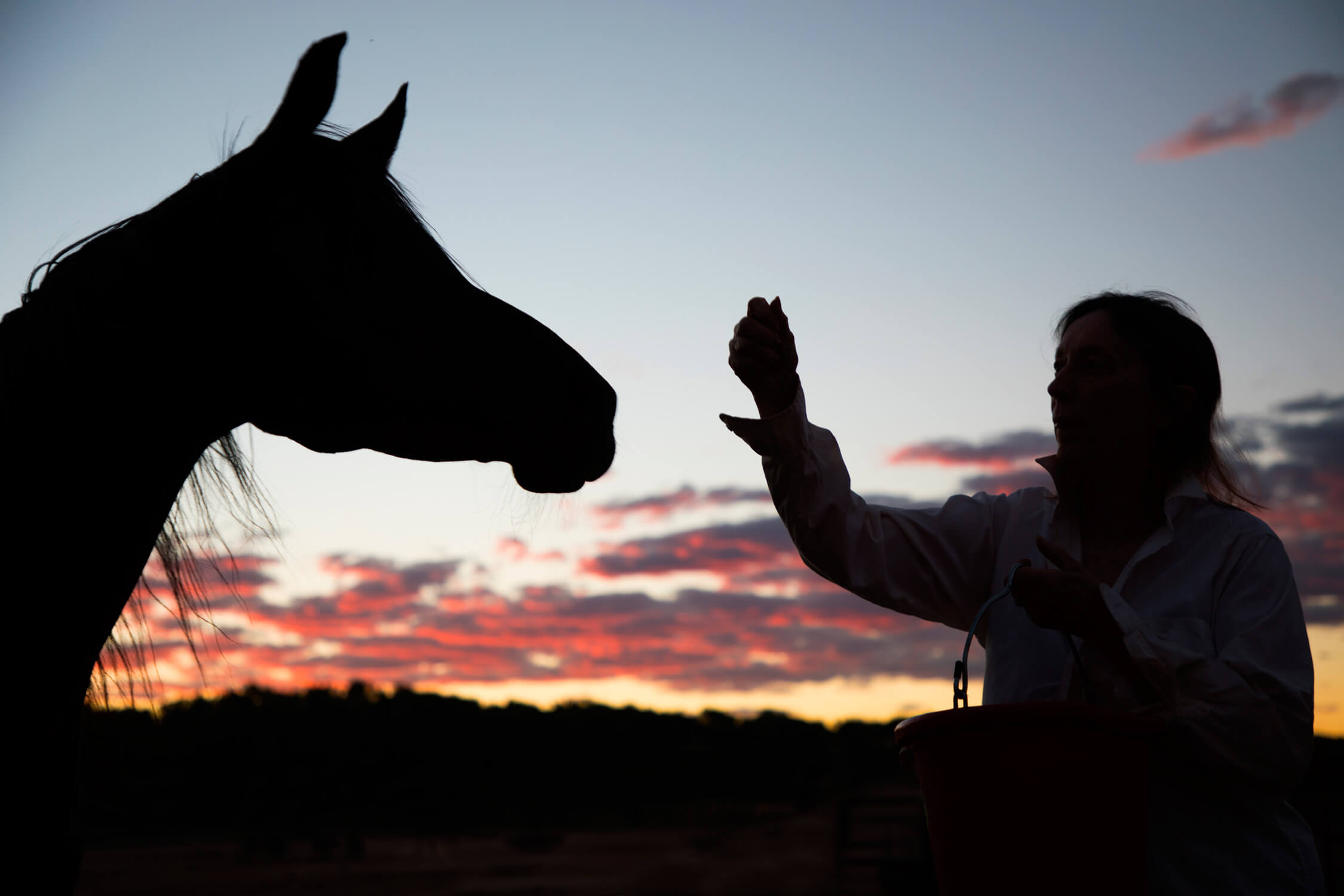 Horse-with-owner-at-sunset