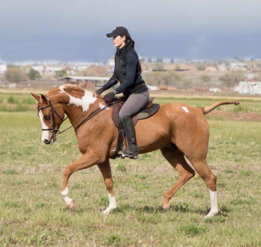 Scheherezade-Arabian-Farms-Doc-Leo-Epic-SSK_1