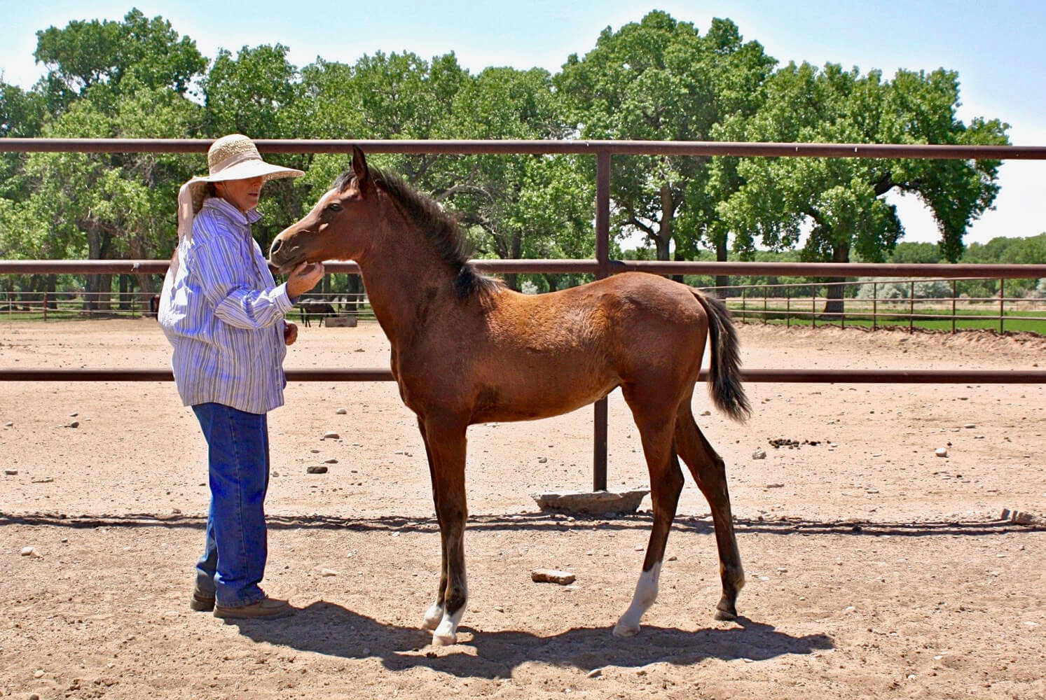 Scheherezade-Arabian-Farms-Owner-with-Horse