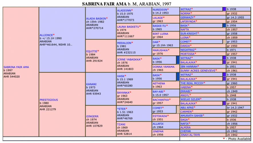 Scheherezade-Arabian-Farms-Sabrina-Fair-AMA-Pedigree
