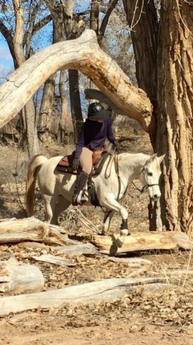Scheherezade-Arabian-Farms-Trail-Riding-Under-Cottonwood-Tree